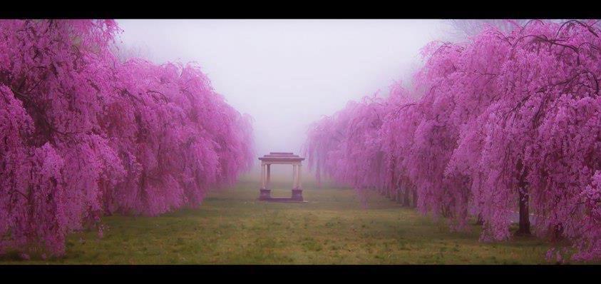 https://www.yoga-integral.fr/wp-content/uploads/2013/01/all_pink.jpg