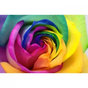 tablou-trandafir-curcubeu-st12722-700x700