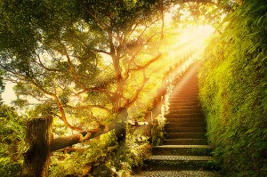 beautiful-green-heaven-light-nature-Favim.com-138441